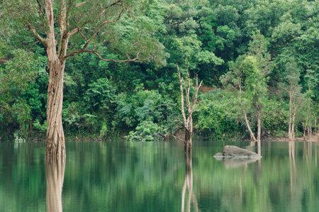 Idyllic landscape of country park Shing Mun reservoir in Hong Kong