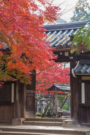 Historical building in Nara, Japan in autumn season 스톡 콘텐츠