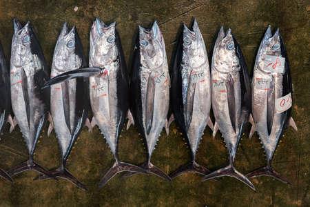 Giant tuna fish is selling in Katsuura fish market, Wakayama, Japan 스톡 콘텐츠