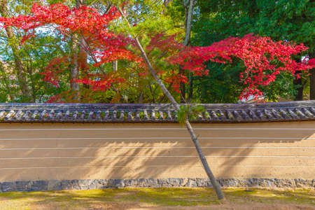 Red leaves in autumn season in Japanese garden with forest background 스톡 콘텐츠