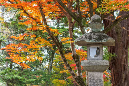 Historical lantern in Shrine with autumn leaves background in Nara, Japan