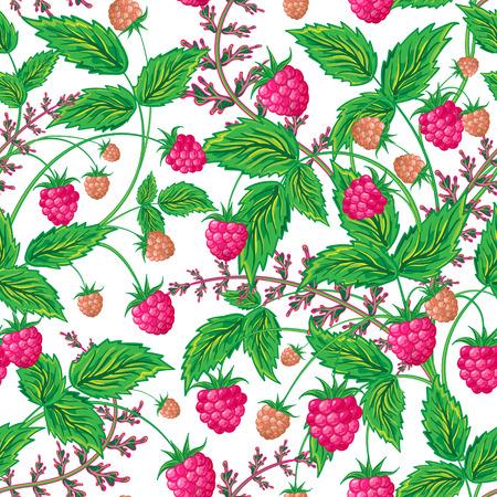 raspberries: Colored raspberries seamless pattern. Seamless pattern with colored hand draw graphic raspberries. Vector illustration. Illustration