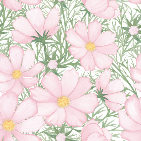 cosmos flower: Light rose flower watercolor pattern cosmos isolated on white background vector