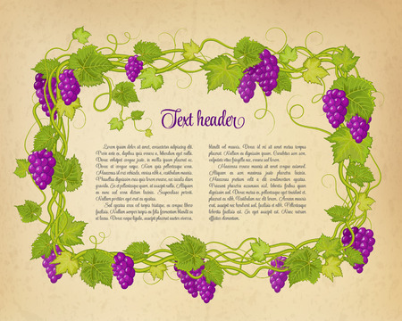 oval  alcohol: Brown wrinkled paper with colorful green violet branch of grapes. Vector illustration. Illustration