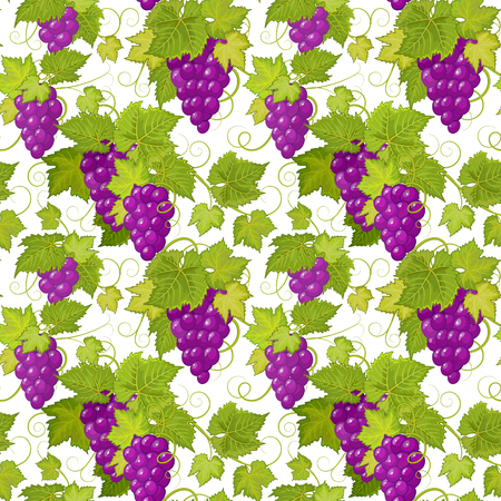 Grapes seamless background. Vector pattern. Vector grapes background illustration. Seamless texture with bunch of grapes. Grapes wallpaper isolated on white background Illustration
