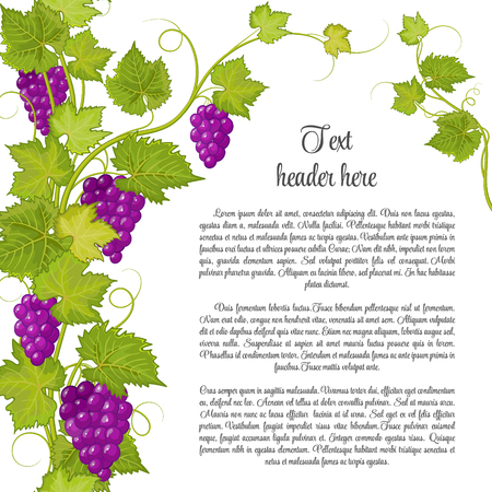 Bunch of grapes for label of wine or other. Grapes pattern page. Violet grape with green leaves.