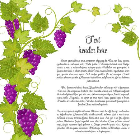 Weintraube für Etikett von Wein oder anderen. Trauben Muster Seite. Violette Traube mit grünen Blättern. Standard-Bild - 55822756