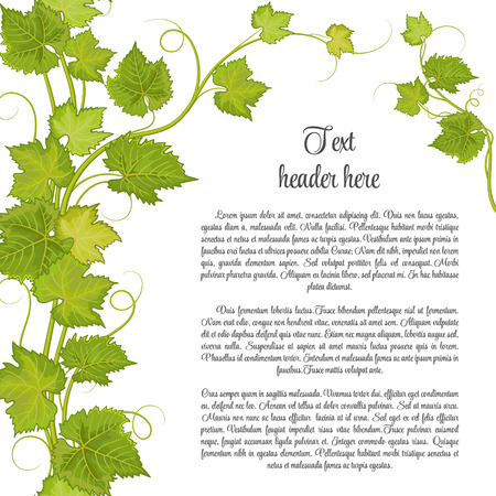 wine background: Bunch of grapes for label of wine or other. Grapes pattern page. Illustration