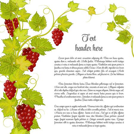 red grape: Bunch of grapes for label of wine or other. Grapes pattern page. Red grape with green leaves.