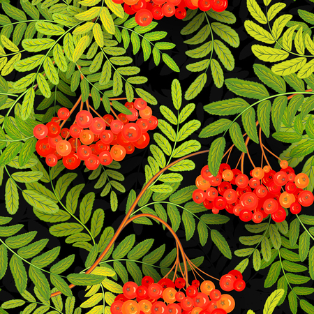 ashberry: Seamless pattern with hand drawing bright green leaves and red ash-berry (rowanberry) on black backdrop. Vector illustration Illustration