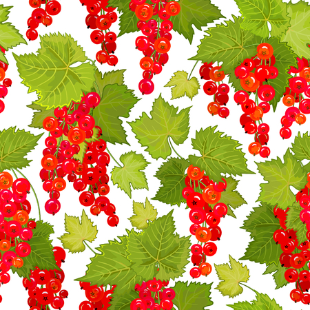 red currant: Red currant seamless pattern. Collection of berries. Vector illustration of berries isolation on white for design menus, recipes and packages product. Illustration