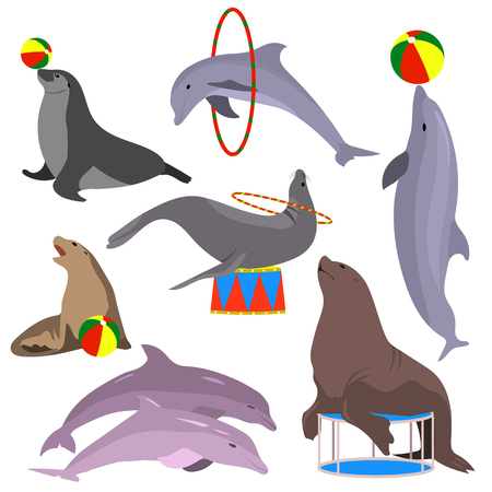 fur seal: Marine circus animals set. Vector illustration. Flat. Dolphins, seal, sea lion, fur seal Marine theater