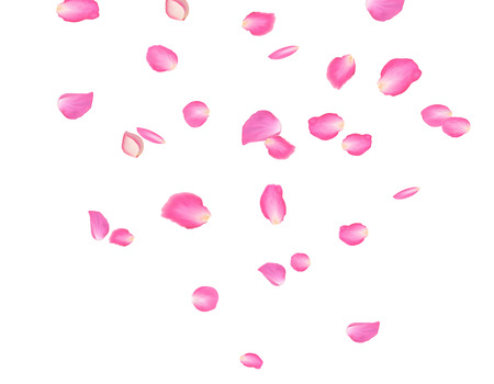 Abstract background with flying pink rose petals. Vector illustration isolated on a background.