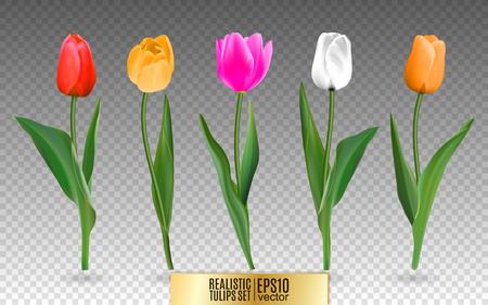 Realistische vector kleurrijke tulpen instellen. Niet traceren. De lege ruimte voor uw ontwerp. Rode tulpenbloemen op transparante achtergrond.