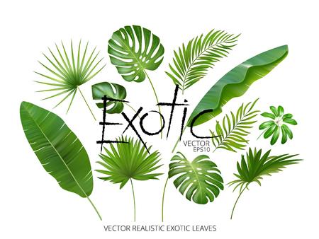 Las hojas exóticas tropicales del vector, las hojas de la selva realista fijaron aislado en el fondo blanco. Colección de hojas de palma. Imitación de acuarela de calidad. No rastrear