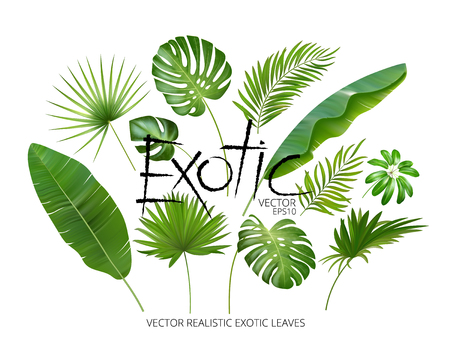 Vector tropical exotic leaves, realistic jungle leaves set isolated on white background. Palm leaf collection. Quality watercolor imitation. Not trace. Vettoriali