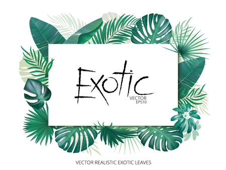 Summer tropical background with exotic palm leaves and plants. Banner template, Vector floral background. Иллюстрация