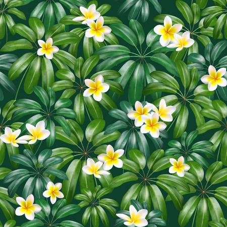 Closeup of exotic white plumeria, flower on the shefler leaf on dark background. Vector illustration Illustration
