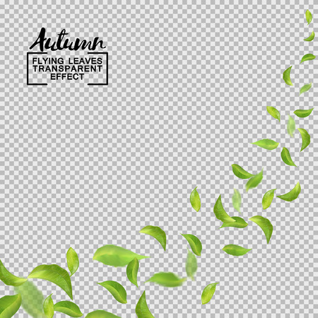 Green leaves flying with the wind. Vector objects on transparent background