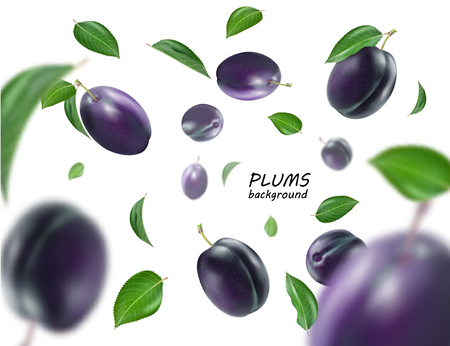 Ripe plums with leaves on white background. Flying blue plums. Quality realistic vector.