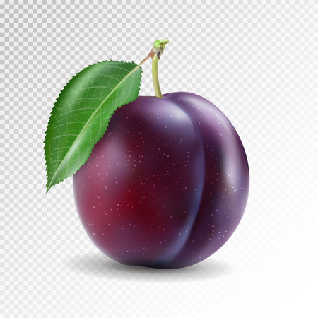 Ripe plum with green leaves. Quality photo-realistic vector illustration of plum fruit