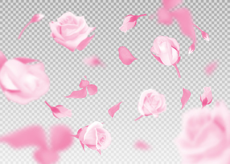 Pink rose falling flowers and buds vector on transparent background.