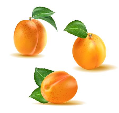 Abrikoos Vector set. Collectie van realistische 3D hele abrikozen geïsoleerd op een witte achtergrond Vector Illustratie