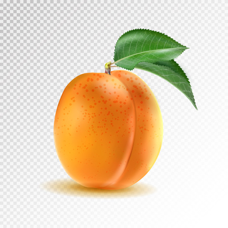 Vector ripe orange apricot on transparent background. Object from realistic 3D vector fruit collection.  イラスト・ベクター素材