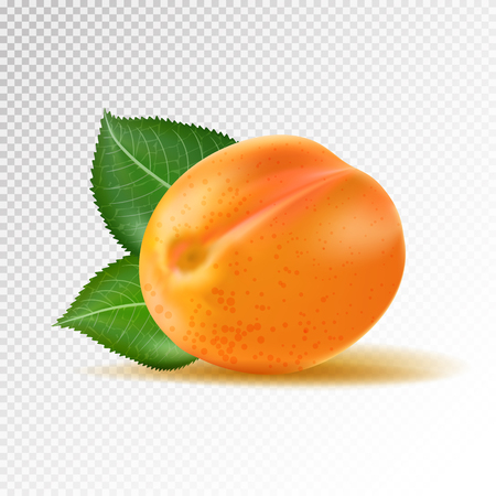 Vector ripe orange apricot on transparent background. Object from realistic 3D vector fruit collection. Illustration