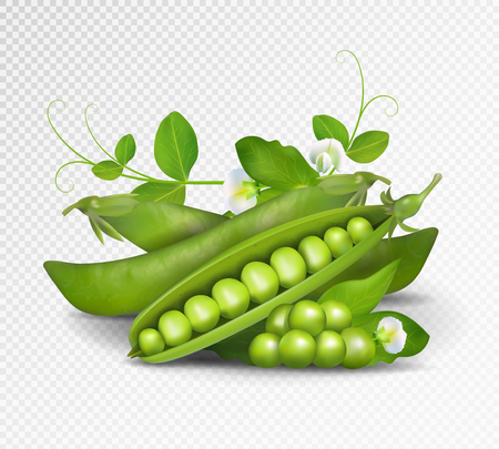 Vector green peas. Photo-realistic vector pods of green peas with leaves and flowers on transparent background.
