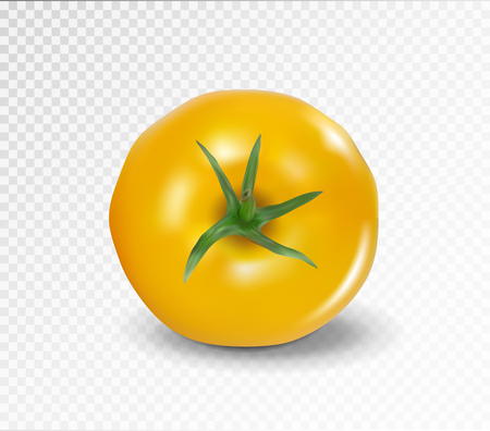 Tomato top side. Realistic vector. Yellow tomato without tail.