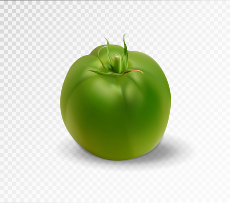 Green realistic isolated tomato. 3d tomato  イラスト・ベクター素材
