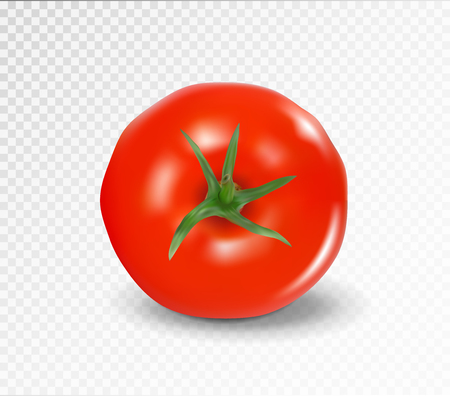 Tomato top side. Realistic vector. Red tomato without tail. Illustration