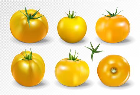 Tomato set. Yellow tomato. Photo-realistic vector tomatoes on transparent background.