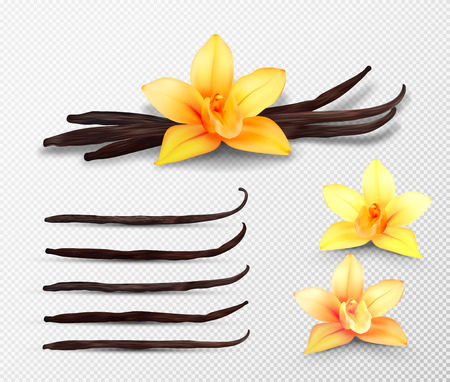 Realistic vector set of isolated elements. Vanilla flowers and pods or sticks