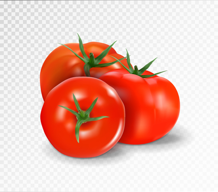 Group of three realistic tomatoes isolated on a transparent background. Vector illustration.. Vettoriali