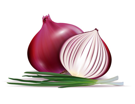 Vector illustration isolated fresh whole and sliced red onion bulbs with green onions close up Ilustração
