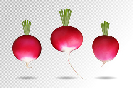 Three photo realistic radishes on a transparent background.