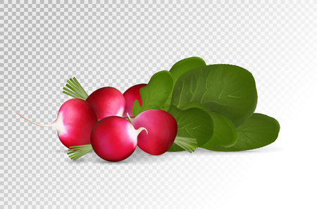 Grope of photo realistic radishes with leaf on a transparent background.