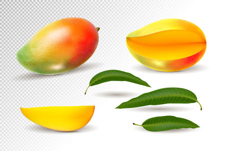 Mango realistic fruit whole and pieces illustration
