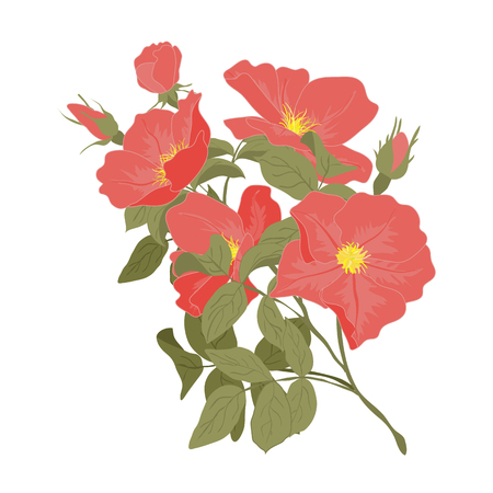 Embroidery wild roses, dogrose flowers. Classic style embroidery, beautiful dogrose pattern vector