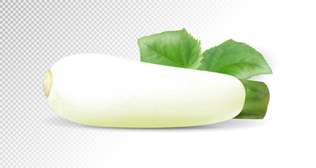 White zucchini vegetable. Realistic vector on transparent background, 3d illustration