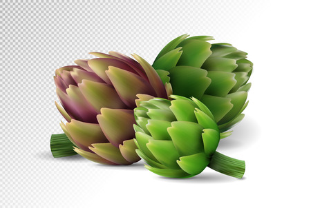 Group of fresh globe artichoke isolated on white background. Realistic vector eps10, 3d illustration