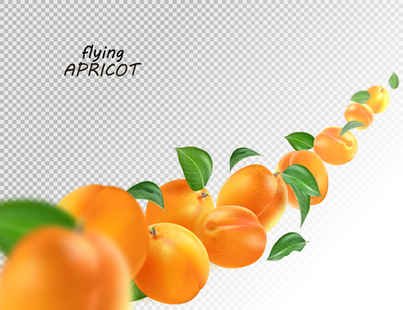 Flying apricots and leaves on transparent background. Whole falling isolated apricot. Realistic vector, 3d illustration