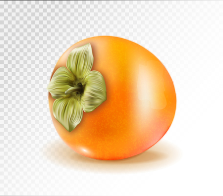 Persimmon fruit isolated on transparent background. Realistic quality vector. 3d illustration Standard-Bild - 126780620