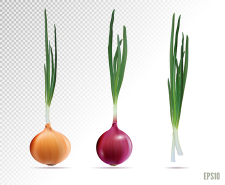 Vector Set of Fresh Whole Yellow Red Green Onion Bulbs Close up Isolated on White Background 向量圖像