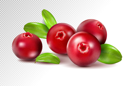 Cranberry with leaves on transparent. Full depth of field. Quality realistic vector, 3d illustration