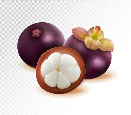 Mangosteen isolated on transparent background. Two whole queen fruits and one half as package design elements. Quality realistic vector, 3d illustration