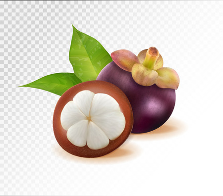 Mangosteens Queen of fruits, mangosteen on transparent background. Quality realistic vector, 3d illustration