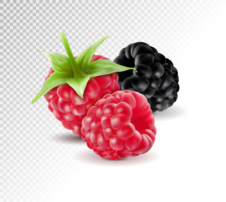 Realistic vector. Blackberries with raspberries set isolated on transparent background. Macro, 3d illustration